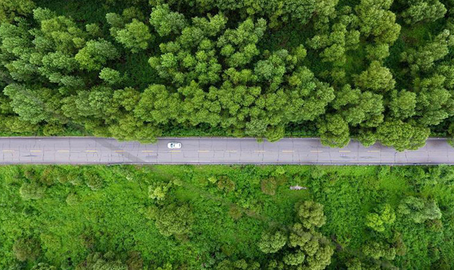 Afforestation efforts enhanced across China