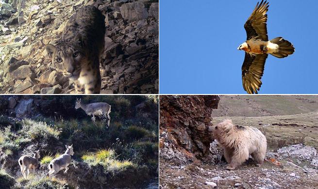 Wild animals in China's Qilianshan National Nature Reserve