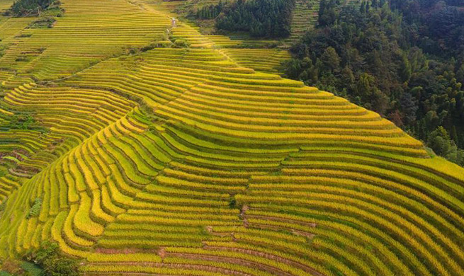 Aerial view of Longji Terraces in south China's Guangxi
