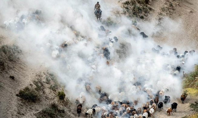 Herdsmen in Xinjiang transfer livestocks to autumn pasture