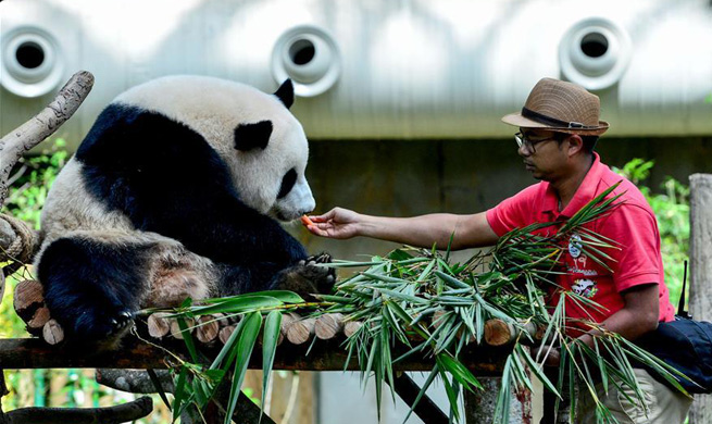 Malaysia-born panda cub to head back to China