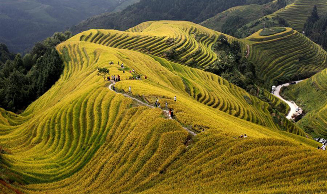 Scenery of terraced fields in Longji, China's Guangxi