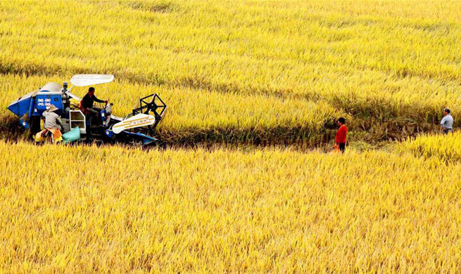 Farmers across China get busy during harvest