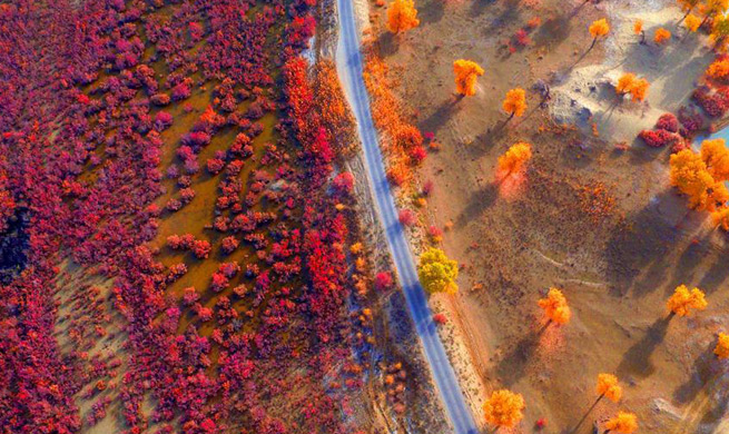 Autumn-colored scenery seen along banks of Tarim River