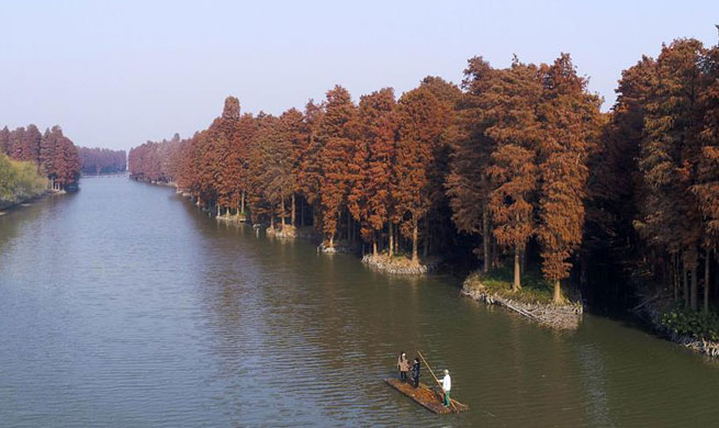 Scenery of artificial water forest in east China's Jiangsu