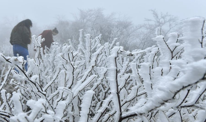Central China's Enshi witnesses 1st snowfall this winter