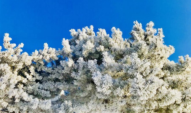 In pics: rime scenery on outskirts of Jilin City