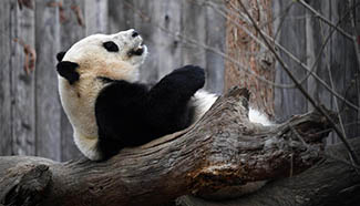 Weekly choices of Xinhua photos (Feb. 20 - Feb. 26)