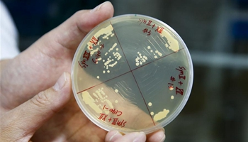 Chinese scientists create 4 synthetic yeast chromosomes