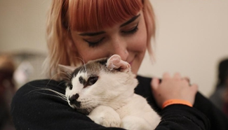 Cat Camp in New York attracts cat lovers