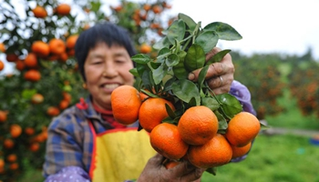 Later maturing ranges harvested in SW China