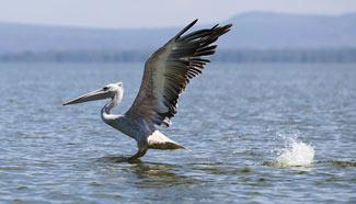 Scenery of Lake Naivasha in Kenya