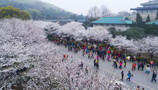 People view cherry blossoms at Wuhan University