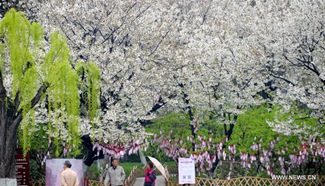 Tourists view cherry blossoms in Jinan, east China