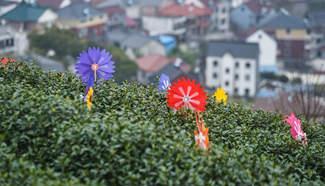 In pics: Tea garden scenery in E China