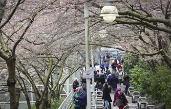 11th Cherry Blossom Festival kicks off in Vancouver