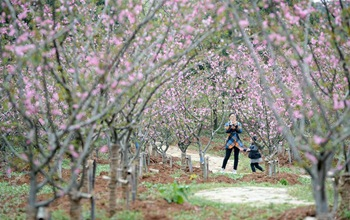 Spring scenery of Xinghua village scenic area in China's Anhui