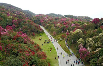Scenery of One Hundred Mile Azalea Forest in Guizhou