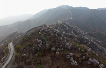 Spring scenery of Mutianyu section of Great Wall in Beijing