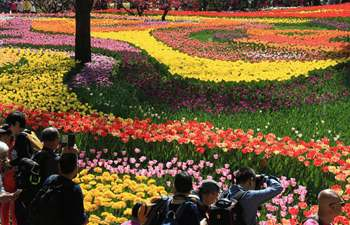 Visitors enjoy view of tulip flowers in Beijing
