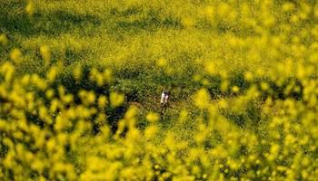 Mustard flowers bloom at park in U.S.