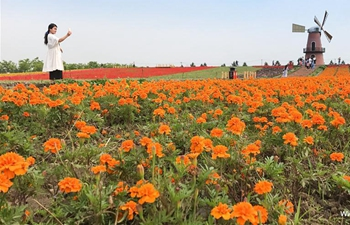 4th Flower Fest held in east China's Anhui