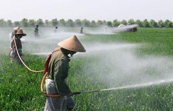 Farmers fertilize wheat in east China's Jiangsu