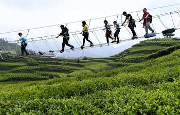 Tourists visit organic tea garden during Labor Day holiday
