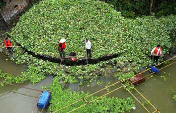 Water hyacinth cleared to protect environment on Langjiang River