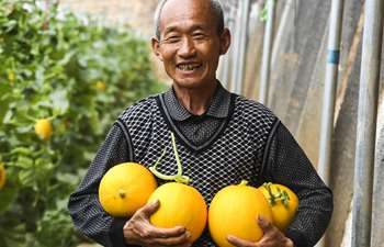 Villagers in north China pick muskmelons in greenhouse