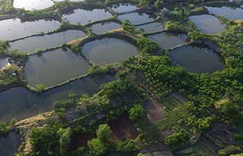 In pics: mulberry fish ponds in E China's Zhejiang
