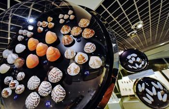 In pics: Bangkok Seashell Museum