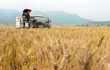 Summer harvest work starts in central China