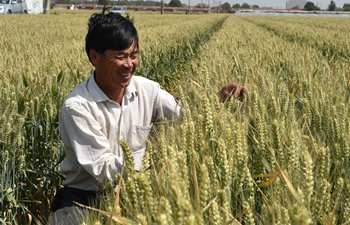 East China's wheat to enter harvest season