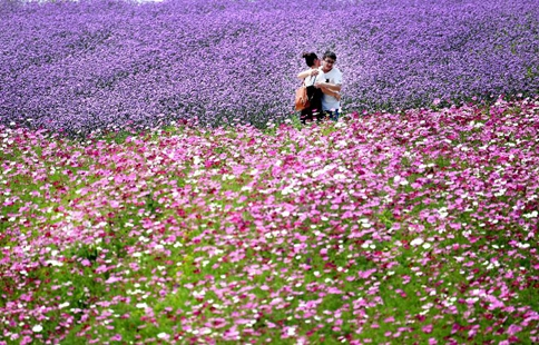 Tourists have fun in flowers at parks in east China
