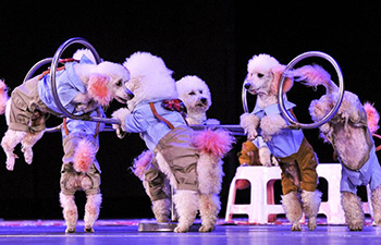 Int'l circus carnival held in Urumqi