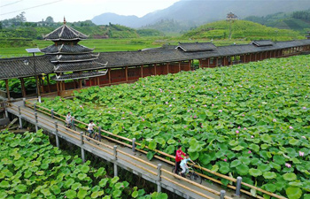 Lotus flowers blooming in south China's Guangxi