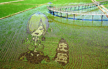 In pics: 3D paddy fields in Shenyang, NE China's Liaoning