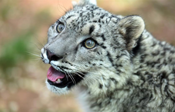 In pics: snow leopard cub seen in wildlife zoo in NW China