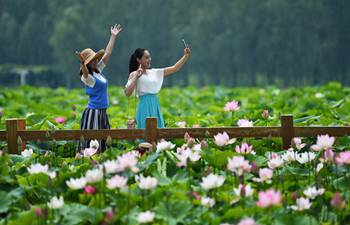 Visitors admire lotus flowers at wetland park in China's Shandong