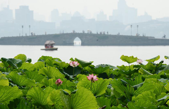 Lotuses blossom in West Lake in Hangzhou, E China