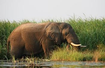 In pics: Akagera National Park in Rwanda