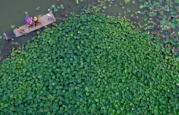 In pics: view of lotus pond in E China