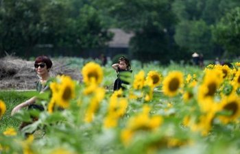 View of sunflower field in E China's Hangzhou