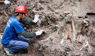 Dinosaur fossil site found in SW China