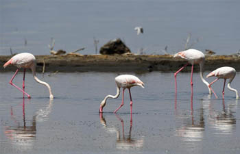 In pics: wild animals in Lake Nakuru National Park, Kenya