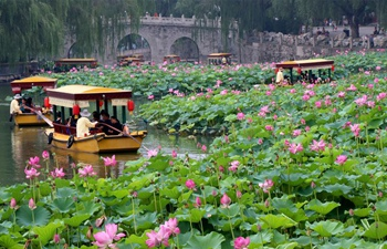 Lotus flowers blossom across China