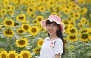 Sunflowers displayed at Olympic Forest Park in Beijing