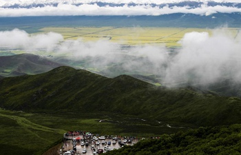 Tourists enjoy cole flowers in Qinghai