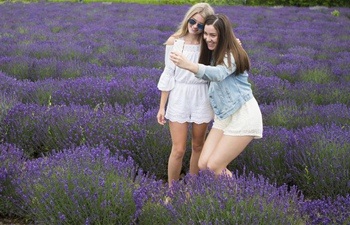 Lavender Festival kicks off in Canada